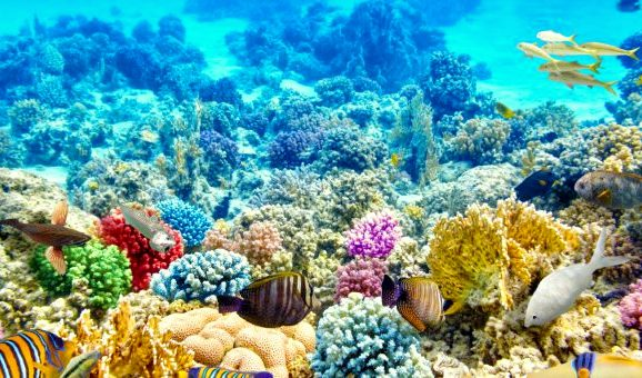/photos/news/Corals_Fish_shutterstock_274904309_L-Large-720x340.jpg1_07873_md.jpg