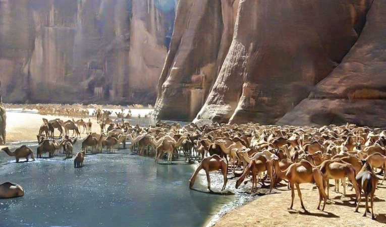 /photos/news/Valley of the Camels wide_e6f5e_md.jpg
